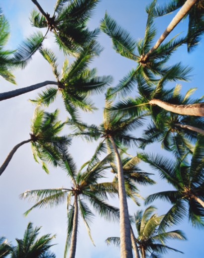 Stock Photo: 1672R-5232 Osa Peninsula, Puerto Jimenez, Puntarenas Province, Costa Rica