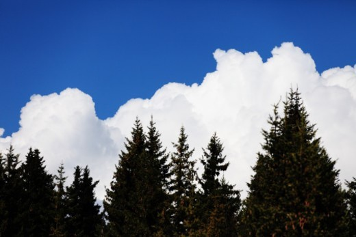 Stock Photo: 1672R-55708 Fir trees and clouds