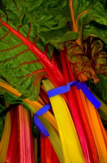 Stock Photo: 1672R-56487 Colorful Swiss Chard for sale at a Farmers Market