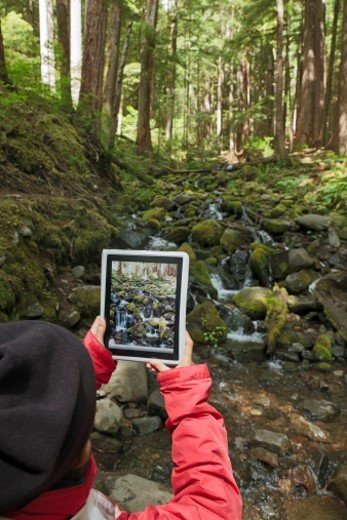 Person with a tablet computer in the forest : Stock Photo