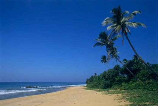 Palm trees on beach surrounding of Bentota (South West coast), Sri Lanka : Stock Photo