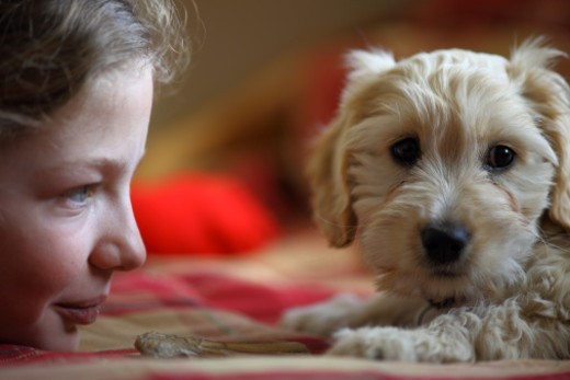 Young girl playing with a puppy dog : Stock Photo