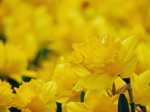 Stock Photo: 1672R-63956 Flowers