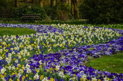 Stock Photo: 1672R-67635 Flower bed in a public park