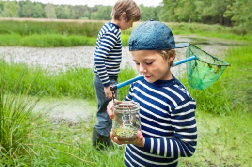 Stock Photo: 1672R-71398 Two boys catching tadpoles in a pond
