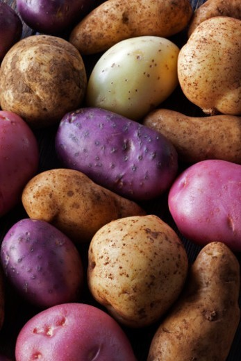 Stock Photo: 1672R-71558 Various types of potato
