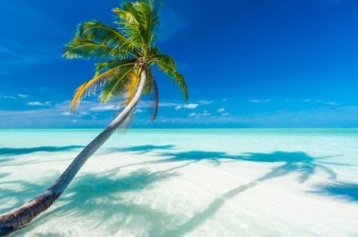 Tropical beach  and a palm tree (Cocos nucifera) : Stock Photo