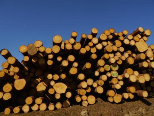 Stock Photo: 1672R-71913 Logs of wood