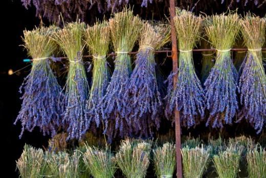 Stock Photo: 1672R-73243 Lavender (Lavandula angustifolia), Vaucluse, Provence-Alpes-Cote d'Azur, Southern France.