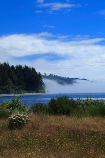 Mist on the sea at Jordan River, Vancouver Island, British Columbia. : Stock Photo
