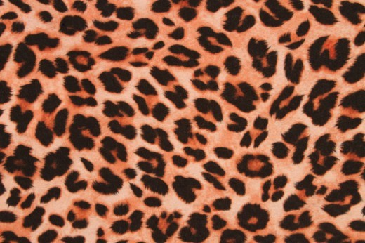 A cheetah print pattern background : Stock Photo