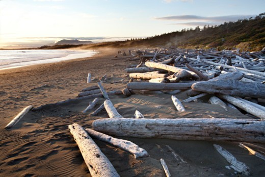 Pacific Rim National Park Reserve. : Stock Photo