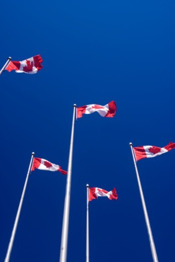 Stock Photo: 1672R-76919 Canadian flags on tall poles against a blue sky