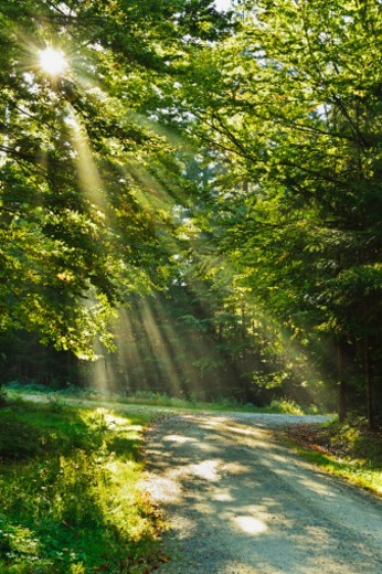 Stock Photo: 1672R-79019 Bavarian Forest National Park, Bavarian Forest.