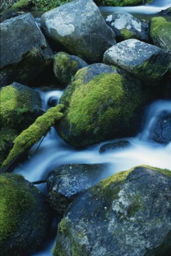 Boulder Brook, Rocky Mountains National Park, Colorado, USA : Stock Photo