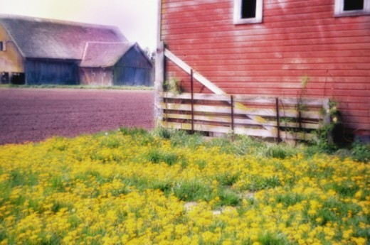 Stock Photo: 1672R-8734 Expanse of flowers amongst grass by barn and ploughed field