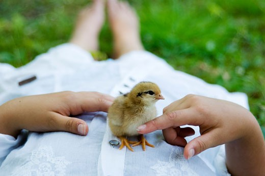 Low section view of a girl lying on the grass with a chick on her stomach : Stock Photo