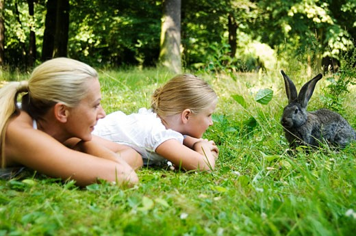 Stock Photo: 1679-160 Mid adult woman and her daughter playing with a rabbit in a park