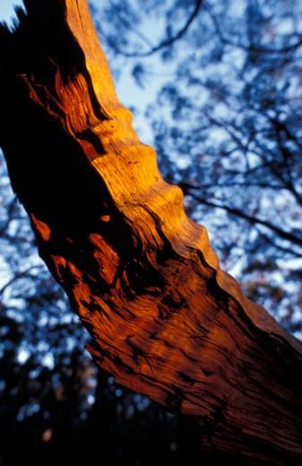 Yellingbo Nature Conservation Park, Victoria, Australia. : Stock Photo