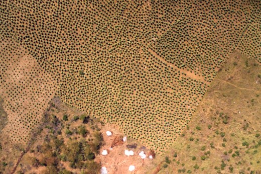 Africa, Chad : Stock Photo