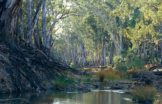 Bullatail Creek, Denniliquin, New South Wales, Australia. : Stock Photo