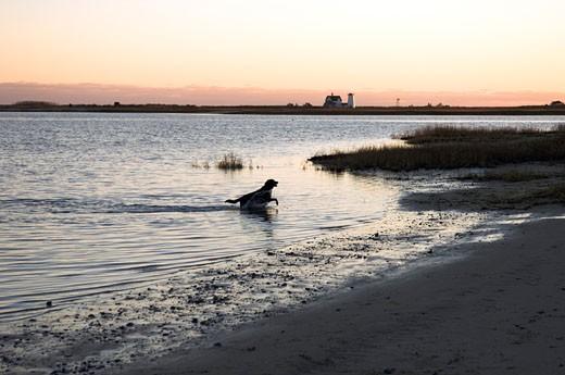 Cape Cod, United States, Massachusetts, Chatham : Stock Photo