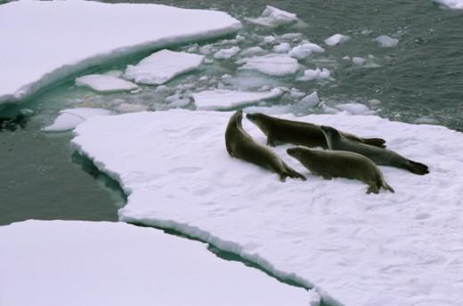 Stock Photo: 1701R-15040 Antarctica.