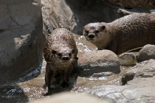 Santa Barbara Zoo in Santa Barbara, California. : Stock Photo