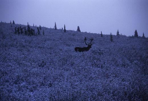 Denali National Park, Alaska. : Stock Photo