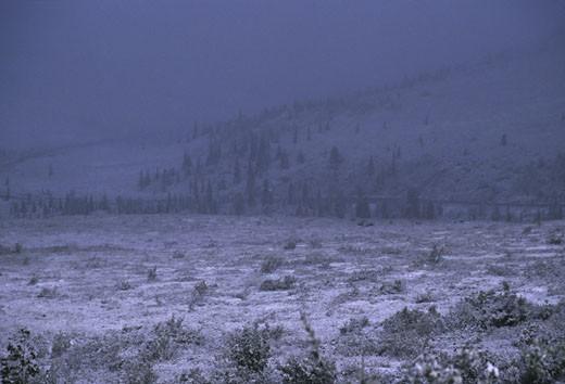 Stock Photo: 1701R-16188 Denali National Park, Alaska.