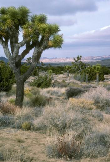 Stock Photo: 1701R-16507 Mojave Desert, near Barstow, California