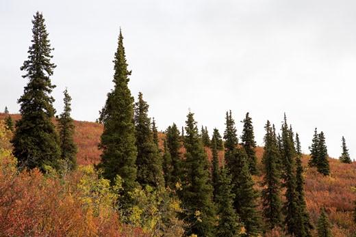 Yukon Territory, Canada. : Stock Photo