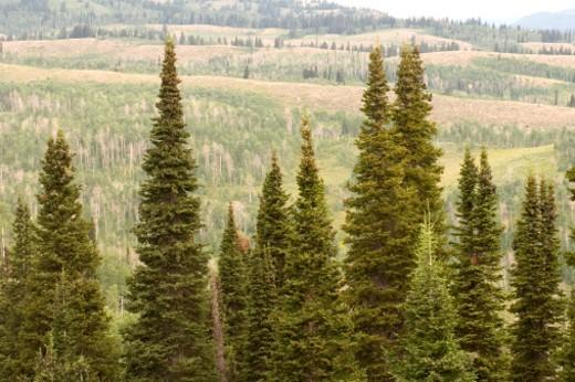 Stock Photo: 1701R-18011 Logan, Utah.