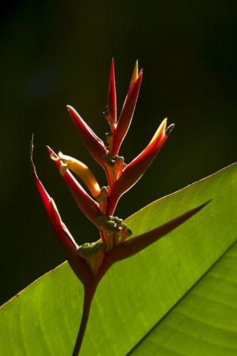 Stock Photo: 1701R-18334 Carara National Park, Costa Rica.