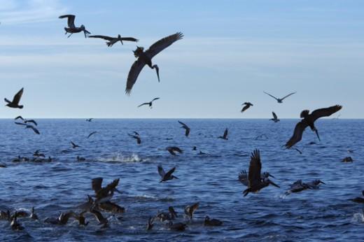 Sea of Cortez, Gulf of California, Baja California, Mexico. : Stock Photo