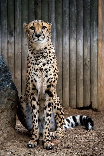 Philadelphia Zoo, Philadelphia, Pennsylvania, USA : Stock Photo