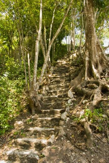 San Ignacio, Belize, Central America : Stock Photo