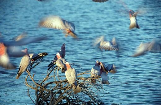 Stock Photo: 1701R-22826 Lake Eyre National Park, South Australia.