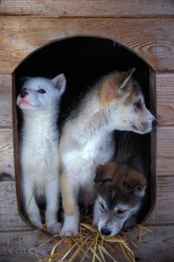 Stock Photo: 1701R-24809 Yukon Territory, Canada.