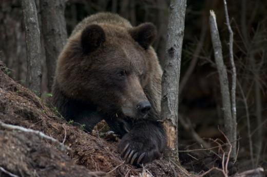 Southeast Alaska. : Stock Photo