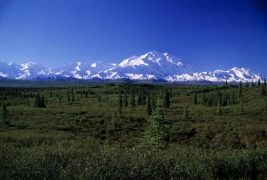 Denali National Park, Alaska, United States. : Stock Photo