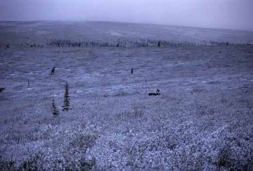 Stock Photo: 1701R-2571 Denali National Park, Alaska, United States.