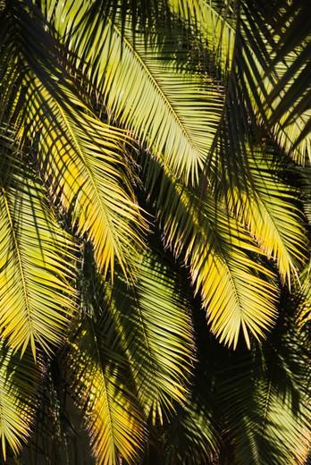 Santa Barbara, California, USA : Stock Photo