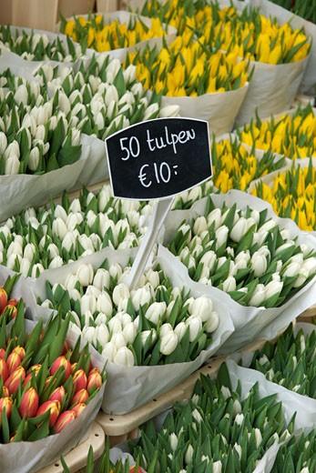 Stock Photo: 1701R-26407 Amsterdam, Holland