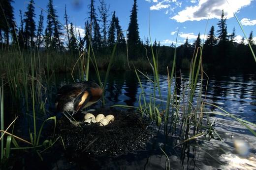 Stock Photo: 1701R-27232 Mentasta, Alaska.