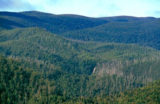 Stock Photo: 1701R-28218 Tarkine Wilderness Area, Tasmania, Australia.