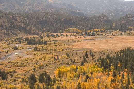 East of Sonora Pass, Stanislaus National Forest, California. : Stock Photo