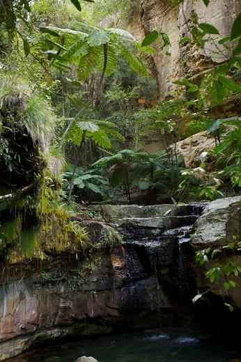 Stock Photo: 1701R-31522 Australia, Queensland, Carnarvon National Park