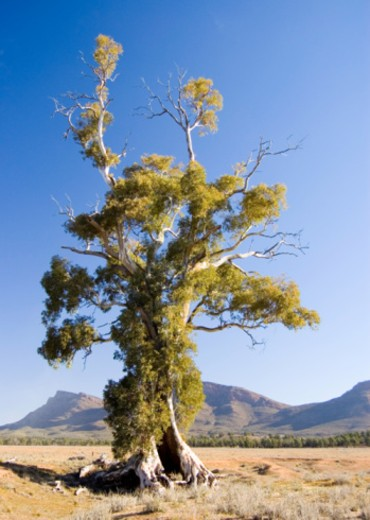 Flinders Ranges, South Australia, Australia : Stock Photo
