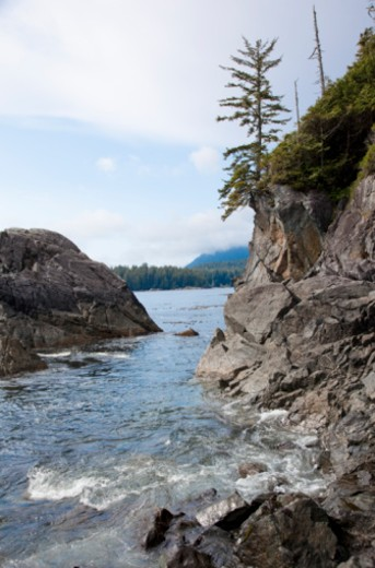 Vancouver Island, British Columbia, Canada. : Stock Photo
